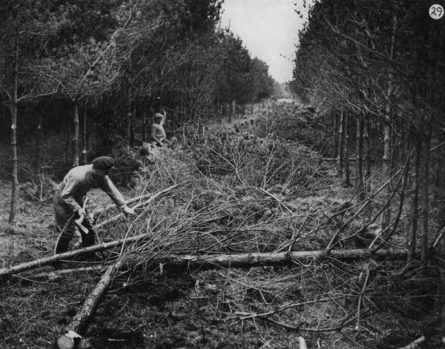 Thinning 1949