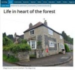 Life in the heart of the forest